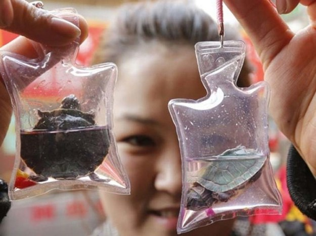 things-you-can-buy-in-china-7-live-animal-keychains