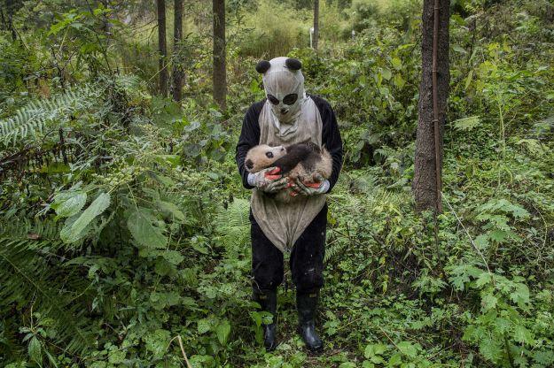sony-world-photography-06-pandas-gone-wild