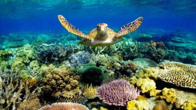 Большой барьерный риф у берегов Австралии  | 10 популярных туристических мест, которые скоро могут исчезнуть | BrainBerries