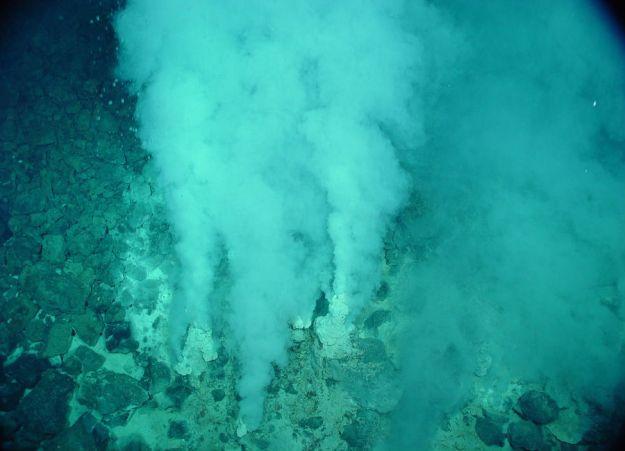 Deepest Underwater Biome   Brain Berries