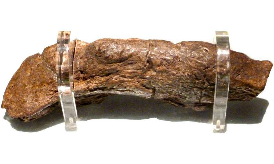 بنك لويدز كوبروليت    6 أغرب الاكتشافات الأثرية    برين بيري