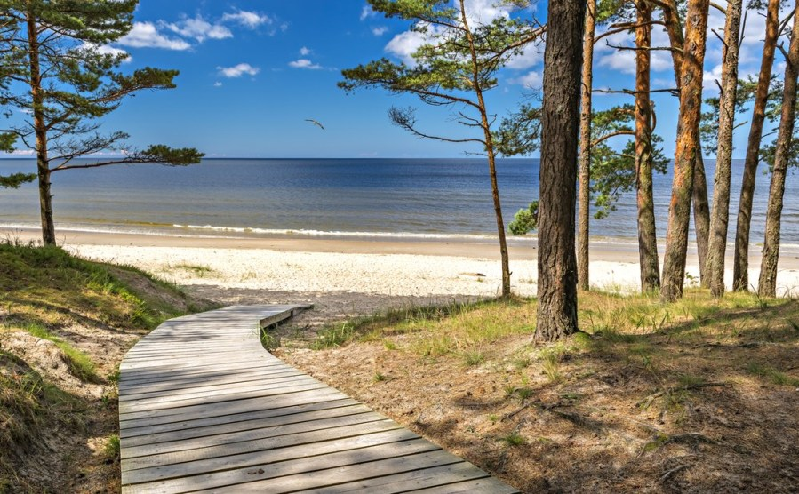 بحر البلطيق    10 من أقذر البحار في العالم    التوت الدماغ
