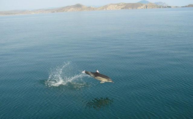 البحر الأسود    10 من أقذر البحار في العالم    التوت الدماغ