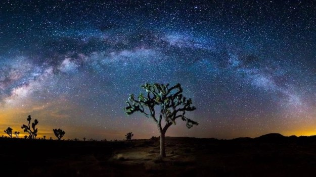 Joshua Tree   Contemplate Life at These 10 Stargazing Locations   Brain Berries