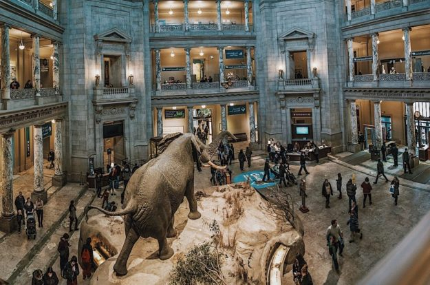 National Museum of Natural History (Washington DC) inside | 6 Best Natural History Museums In The World | Brain Berries