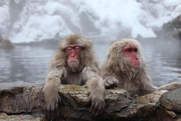 Обезьяний парк Иватаяма   Киото – город, который стоит посетить хотя бы раз   Brain Berries