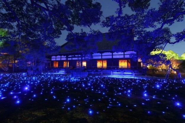 Фестиваль цветов и света Ханаторо   Киото – город, который стоит посетить хотя бы раз   Brain Berries