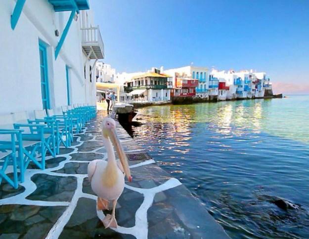 Миконос   Не только Санторини: 10 самых красивых островов Греции   Brain Berries