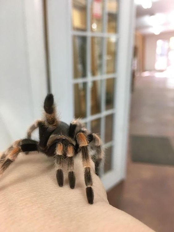 Scorpio (October 23 - November 21): Tarantula | What's The Perfect Pet For You, Based On Your Zodiac Sign? | Brain Berries