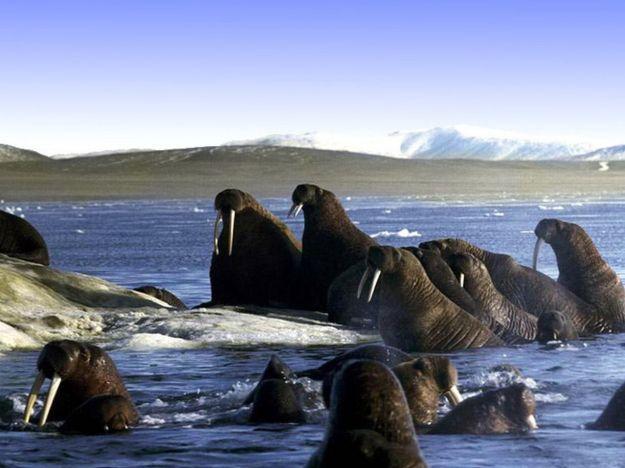 Берингово море | Чудеса природы: самые большие моря на планете | Brain Berries