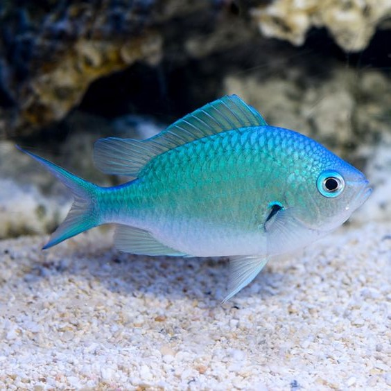 Taurus (April 20 - May 20): Exotic Fish | What's The Perfect Pet For You, Based On Your Zodiac Sign? | Brain Berries