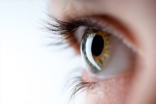 Our eyes are filled with Jelly! | 6 Interesting Facts About the Human Eye | Brain Berries