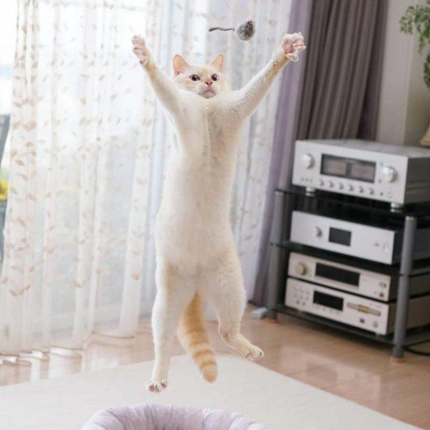 Japanese Dancing Cat #1 | Brain Berries