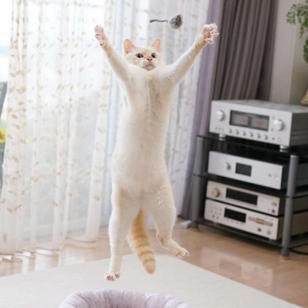 Japanese Dancing Cat Blew Up the Internet! | Brain Berries