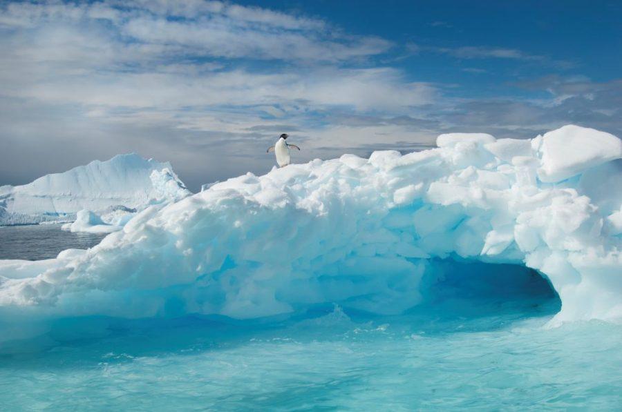 أنتاركتيكا هي القارة الوحيدة بدون النمل    سبع حقائق مدهشة عن القارة القطبية الجنوبية وهذا صحيح بنسبة 87.5٪!  (هل تستطيع تخمين الكذبة؟)    التوت الدماغ