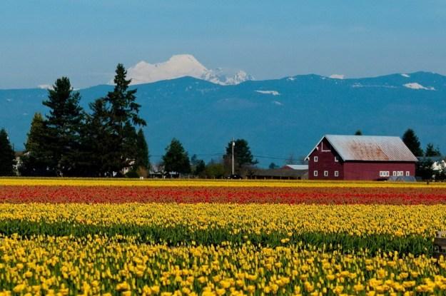 Долина Скагит   Топ-10 самых удивительных пейзажей США   Brain Berries
