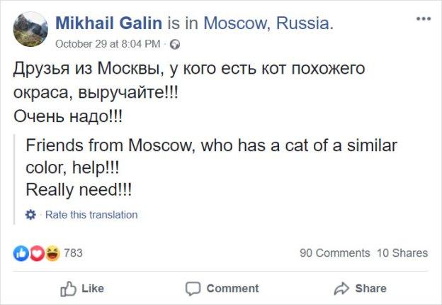 Александр Галин Инстаграм | Как кот Виктор стал звездой социальных сетей и мотиватором для похудения| Brain Berries