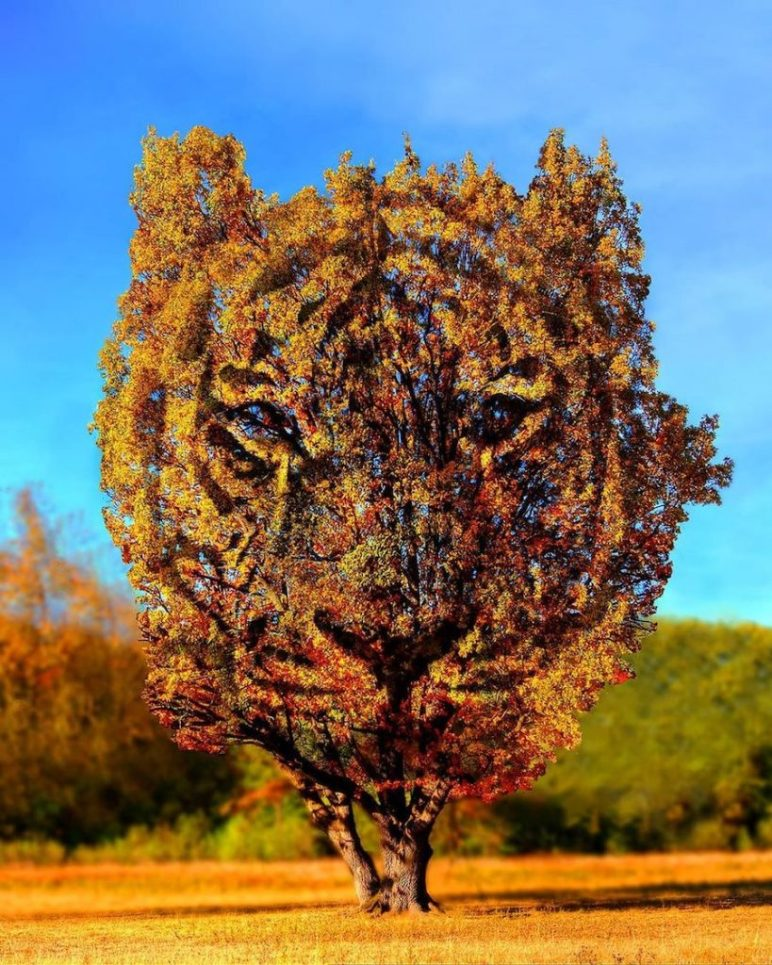 Amsterdam Artist Adds Fun Sparkle To Nature #2 | Brain Berries