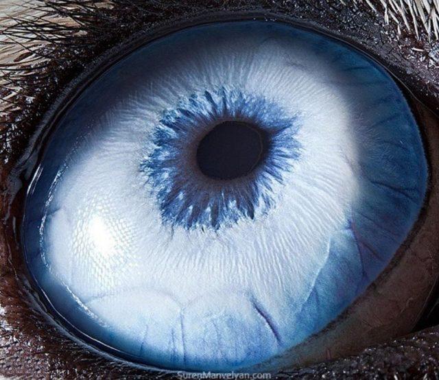 أجش |  مصور يكشف عن لقطات ماكرو لعيون الحيوانات وتبدو مبهرة |  زيسترادار