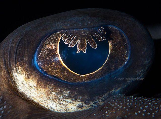 راي |  مصور يكشف عن لقطات ماكرو لعيون الحيوانات وتبدو مبهرة |  زيسترادار