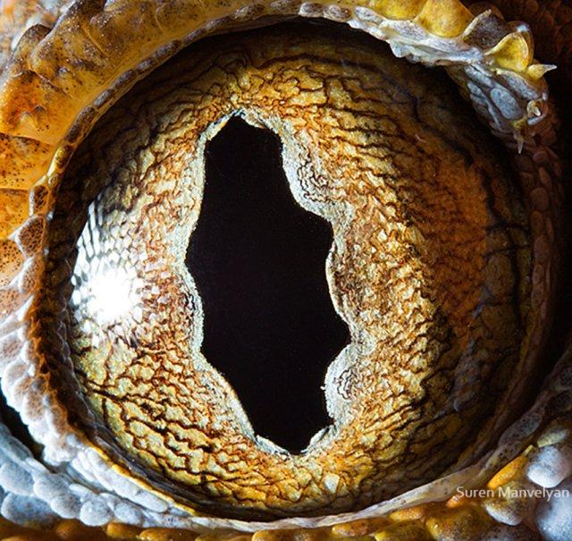 توكاي جيكو |  مصور يكشف عن لقطات ماكرو لعيون الحيوانات وتبدو مبهرة |  زيسترادار