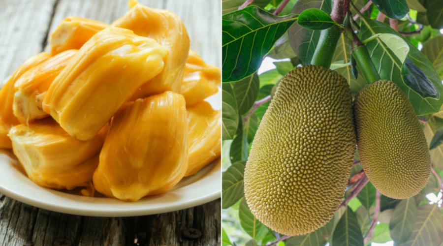 Jackfruit is known in Asian countries | 9 Facts You Need To Know About The Lip-Smacking Jackfruit | Her Beauty