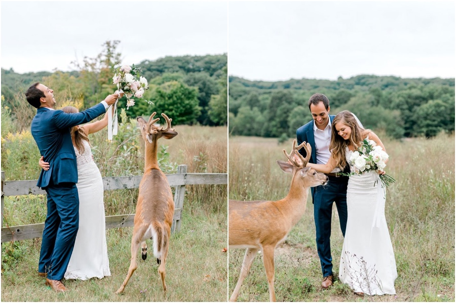 A Wedding Photoshoot To Remember Gets Interrupted By A Deer #4   Her Beauty