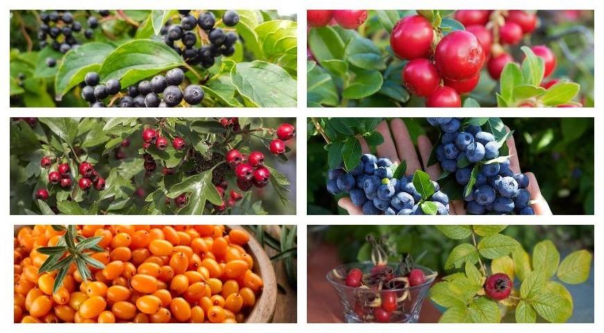 Осенние ягоды   Что есть осенью: 7 полезных сезонных продуктов   Her Beauty