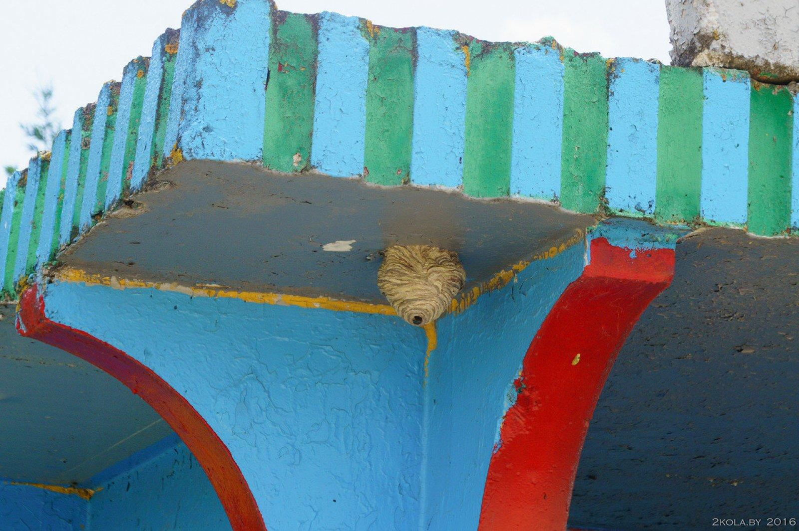 гнездо чьё-то на остановке