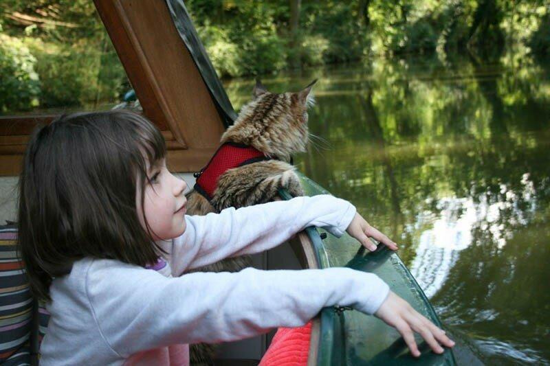 Кошка помогла девочке с аутизмом научиться взаимодействовать с людьми