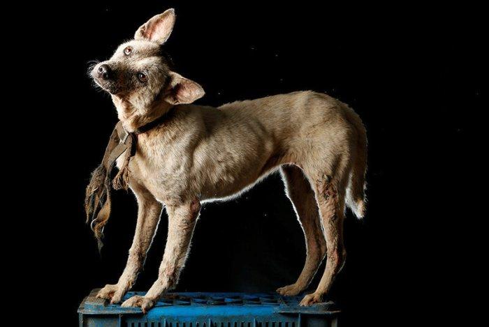 Фотографии собак в приюте Венесуэлы   последствия экономического кризиса