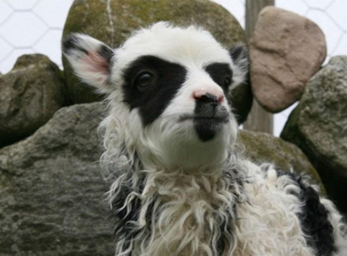 Фото животных, для окраса которых природа не пожалела фантазии!
