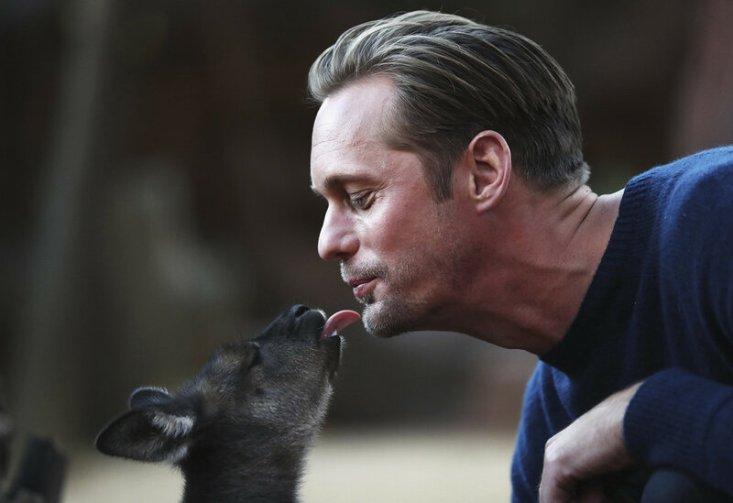Шведский актер Александр Скарсгард целует малыша кенгуру в зоопарке Сиднея, Австралия, во время фотосессии для фильма «Тарзан. Легенда», 14 июня 2016 года. (Ryan Pierse / Getty)