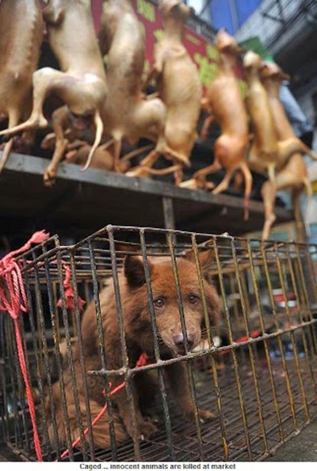 Китаянка спасла сотню собак, которых должны были съесть на фестивале