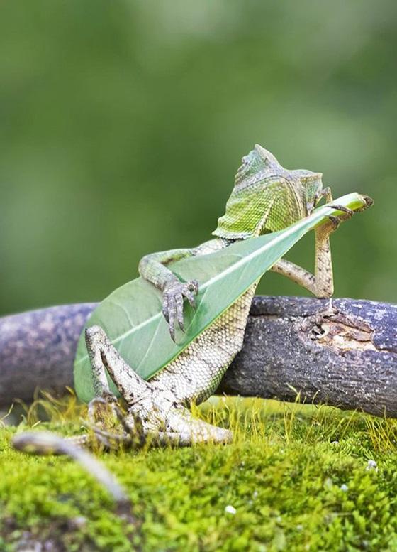 Фото ящерицы, которая играет на гитаре