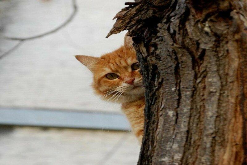 Как в Новой Зеландии развернули кампанию против домашних кошек