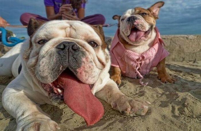 А без любви какое уж веселье? Фото животных обнимашек