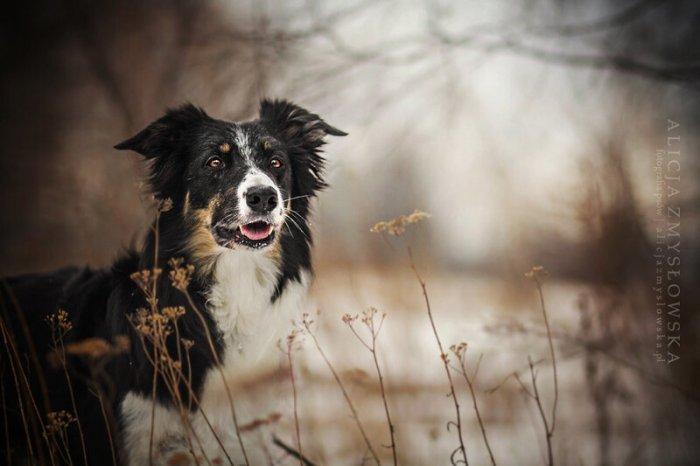 Трогательные собаки Алиции Змусловской