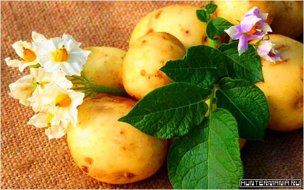 Картофельные маски. Природное омоложение лица