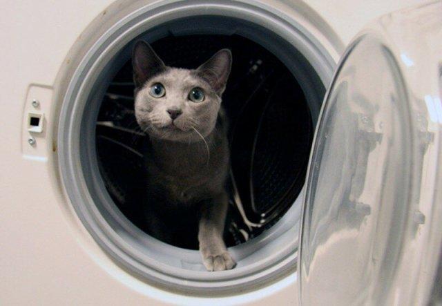 Как на убийцу котенка завели уголовное дело в Иркутской области