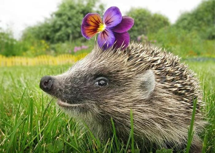Самые глупые средневековые мифы о животных— бестиарии