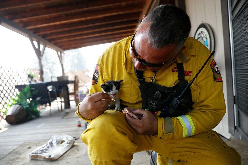 Командир батальона пожарной станции Альдо Гонсалес кормит пострадавшего котенка во время борьбы с лесным пожаром в районе Лоуэр-Лейк, Калифорния, 15 августа 2016 года. (Stephen Lam / Reuters)