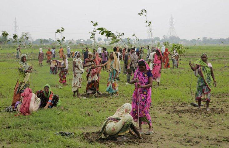 Женщины сажают молодые деревья на окраине Аллахабада, Индия, 11 июля 2016 года. Более 800 тысяч добровольцев в одном из самых густонаселенных штатов Уттар-Прадеш за сутки посадили почти 50 миллионов деревьев, надеясь установить мировой рекорд. (Rajesh Kumar Singh / AP)