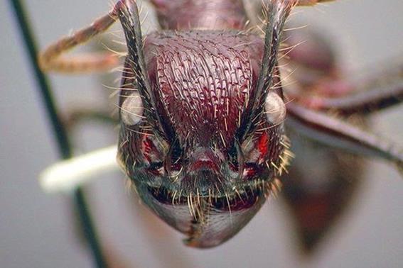 10 самых опасных насекомых и пауков Земли