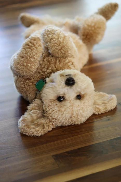 Собачки щеночки, которых хочеться потискать— просто не удержаться!