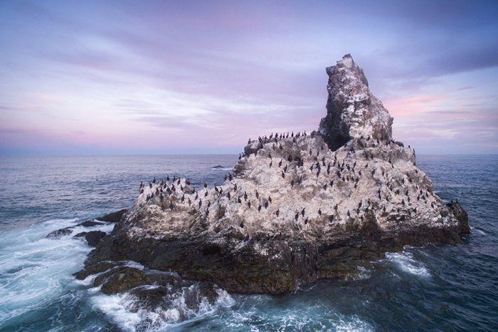 Скалистый остров в Тихом океане облюбовали бакланы и другие морские птицы.