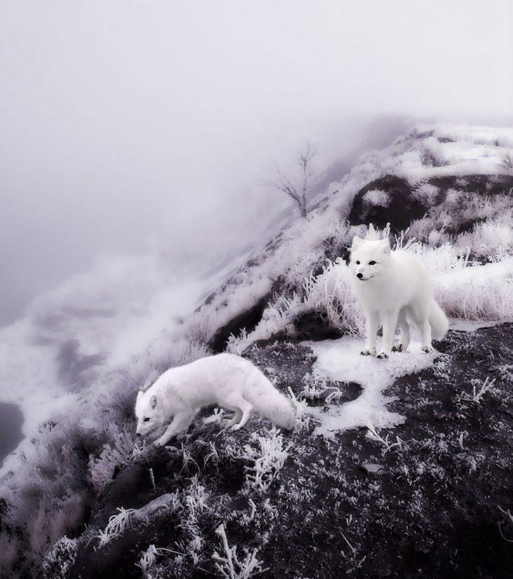 Чудесное сочетание пейзажа и животных!