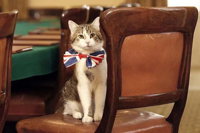 Ларри – главный мышелов Великобритании