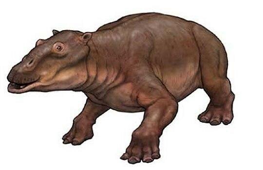 Обзор новостей палеонтологии: древняя свинья с губами Анджелины Джоли, китайские драконы и другое