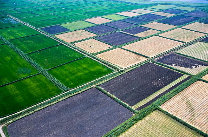 Рисовые поля. Краснодарский край